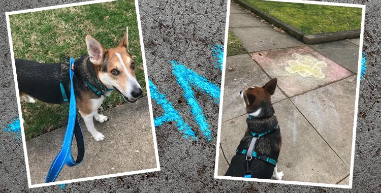 Dog and Sidewalk Art
